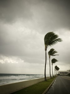 Wind blows palm trees in a tropical storm
